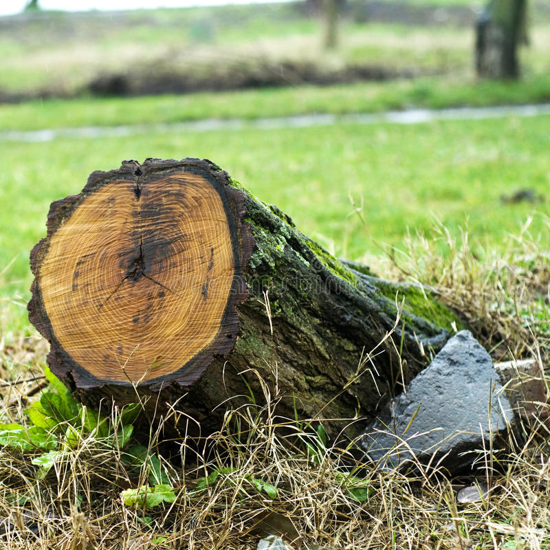 Tocón de árbol foto de archivo libre de regalías
