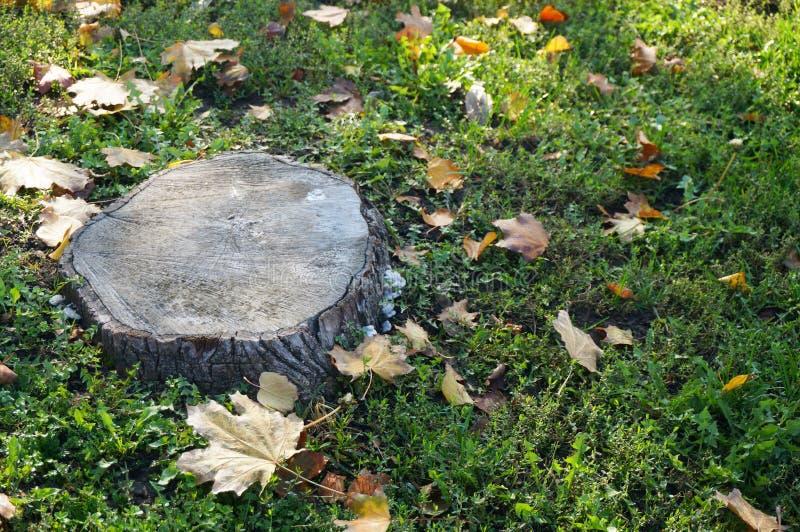 Tocón de árbol fotografía de archivo