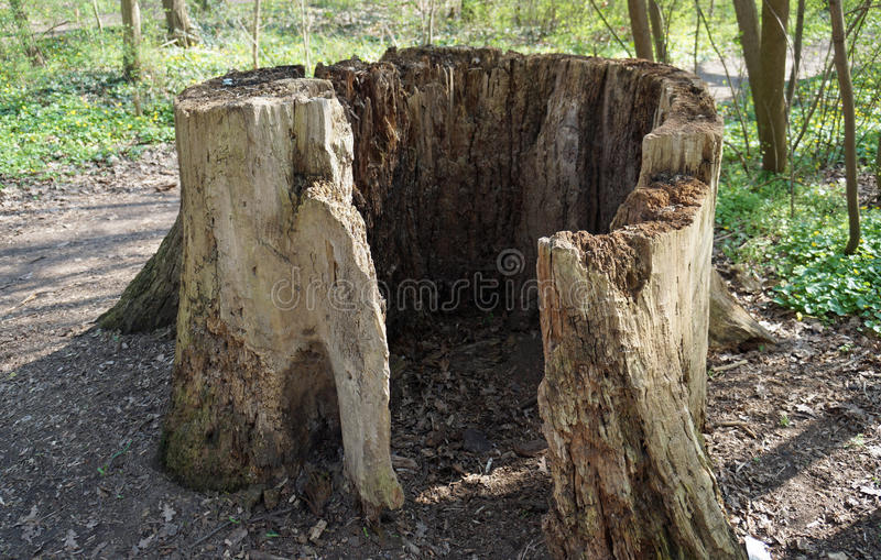 Tocón de árbol ahuecado-hacia fuera viejo fotografía de archivo