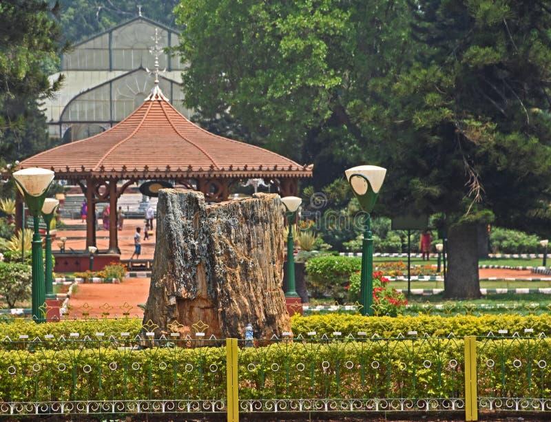 Tocón de árbol aterrorizado en Bangalore imágenes de archivo libres de regalías