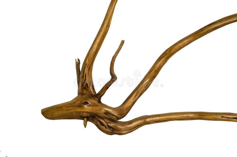 Tocón de árbol del Driftwood en el fondo blanco imagenes de archivo