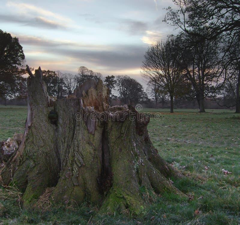 Tocón de árbol en el amanecer imágenes de archivo libres de regalías