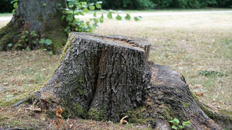 Tocón de árbol en un parque foto de archivo libre de regalías