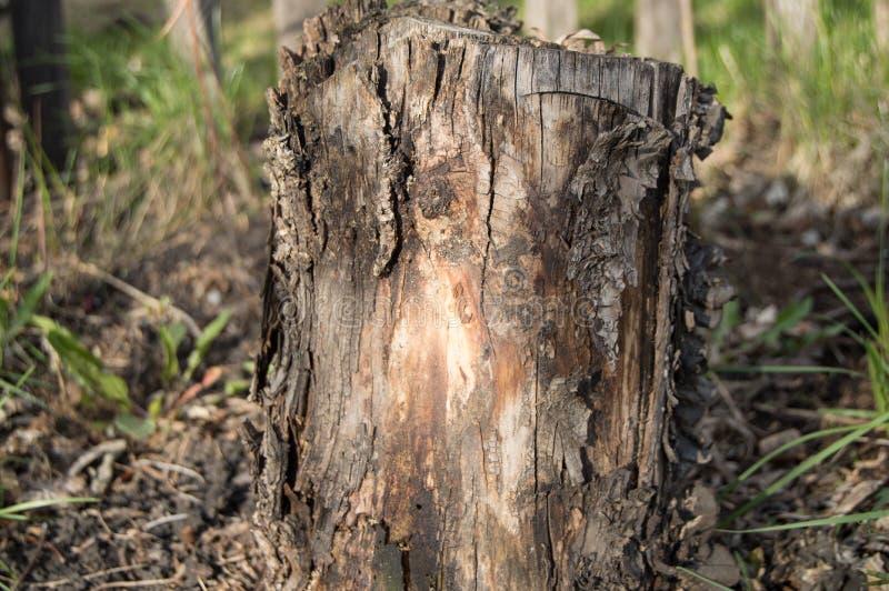 Tocón de árbol putrefacto viejo oscuro en el jardín del bosque fotografía de archivo