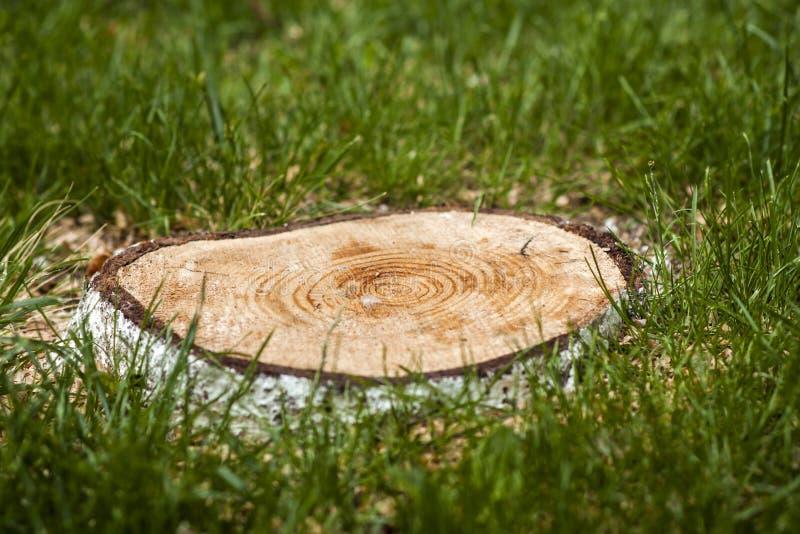 Tocón de un árbol en hierba verde fotografía de archivo