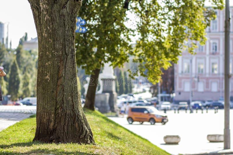 Tocón de un árbol en la hierba verde en la ciudad fotos de archivo