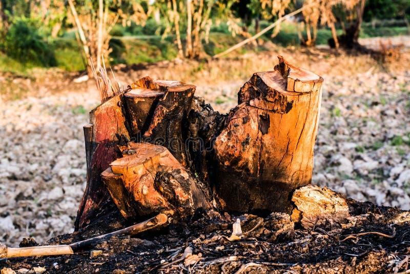Tocón de un árbol y de una quemadura del corte imagen de archivo