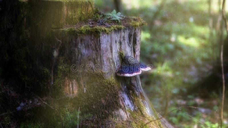 Tocón en el bosque de hadas fotografía de archivo libre de regalías