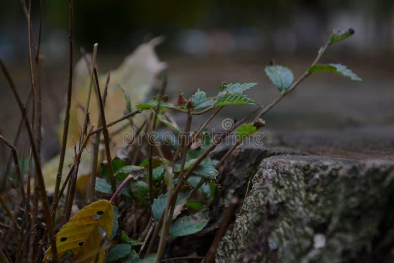 Tocón, fotografía macra imagen de archivo libre de regalías