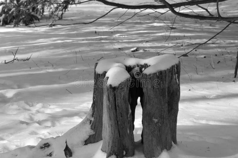 Tocón nevado con el agujero fotos de archivo libres de regalías