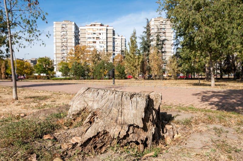 Tocón putrefacto viejo del árbol cortado en el parque con las construcciones de viviendas modernas en el fondo fotos de archivo