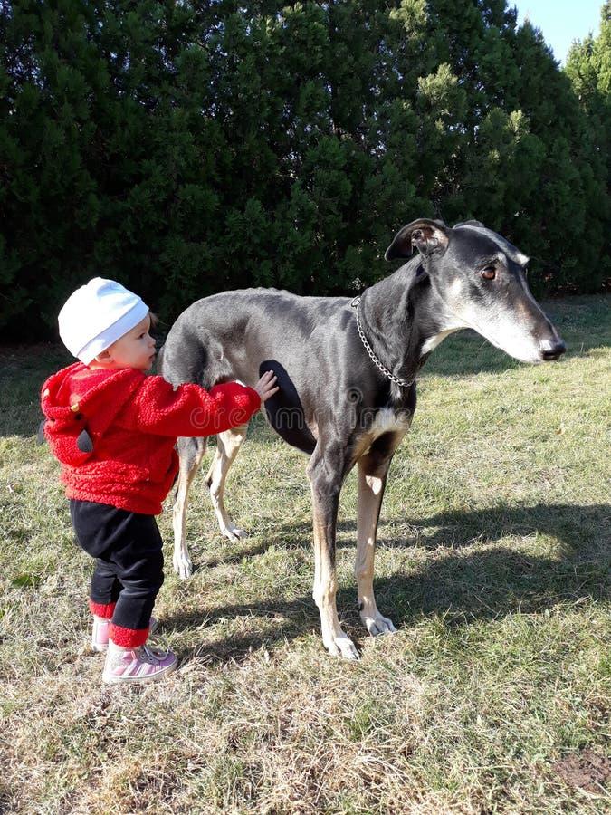 Tocco delicato di bambino e di cane fotografia stock libera da diritti