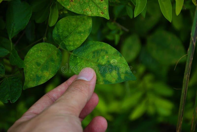 Tocco della mano una foglia verde Prenda la cura della natura fotografia stock libera da diritti