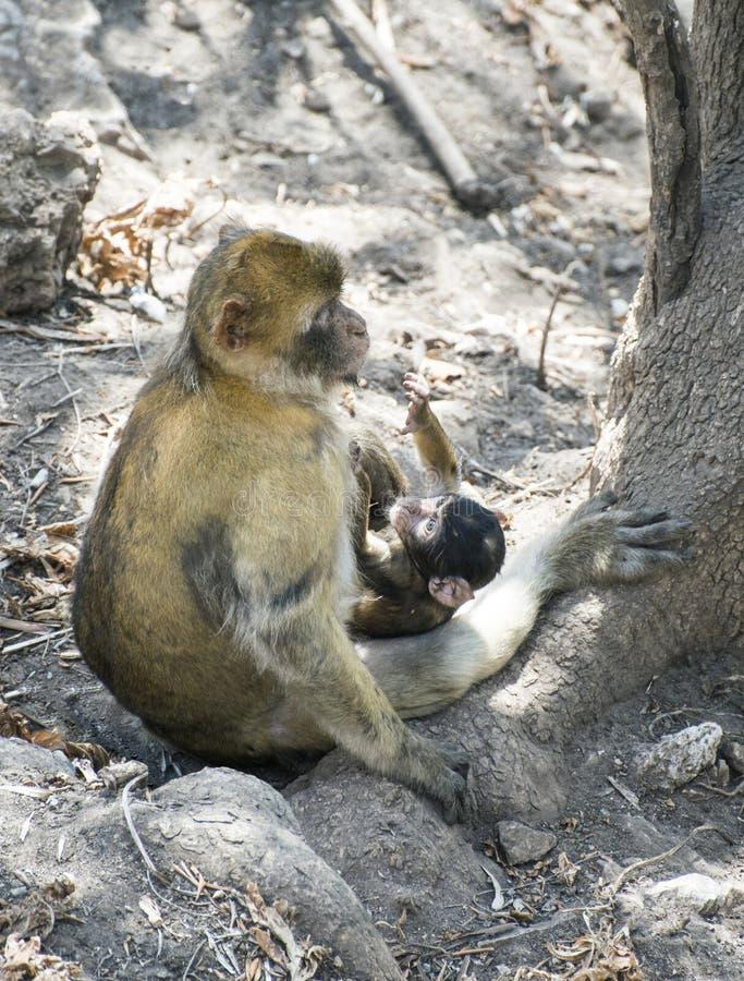 Baby monkey fotografia stock libera da diritti