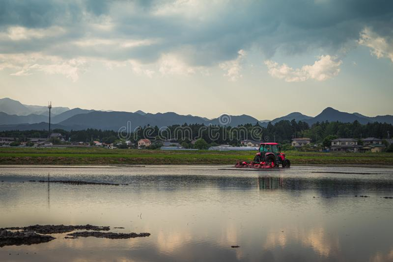 Tractor in a rice paddy. Tochigi, Japan. June 11, 2017. Tractor preparing a rice paddy for planting stock images