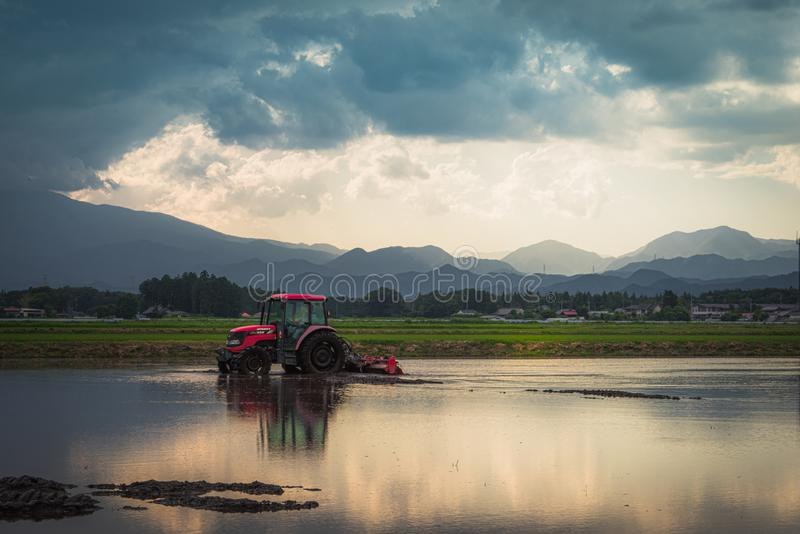 Tractor in a rice paddy. Tochigi, Japan. June 11, 2017. Tractor preparing a rice paddy for planting stock photo