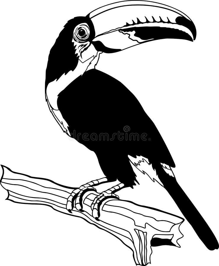 Toco pieprzojada ilustracja royalty ilustracja