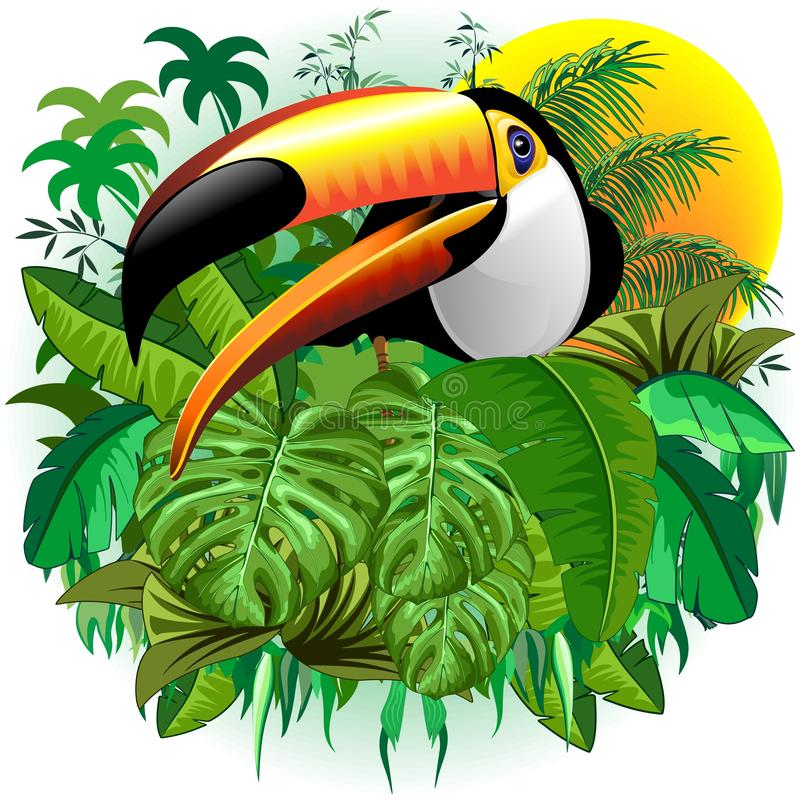 Toco Toucan Wild Exotic Bird på tropisk djungelvektorillustration stock illustrationer