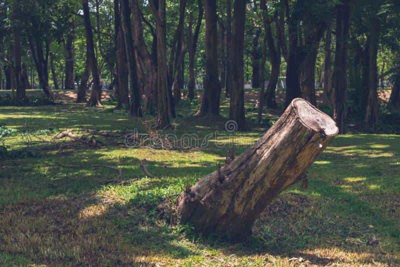 Tocones cortados en el bosque imagen de archivo libre de regalías