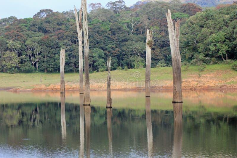 Tocones de árbol reflejados en las aguas inmóviles del lago Periyar fotos de archivo