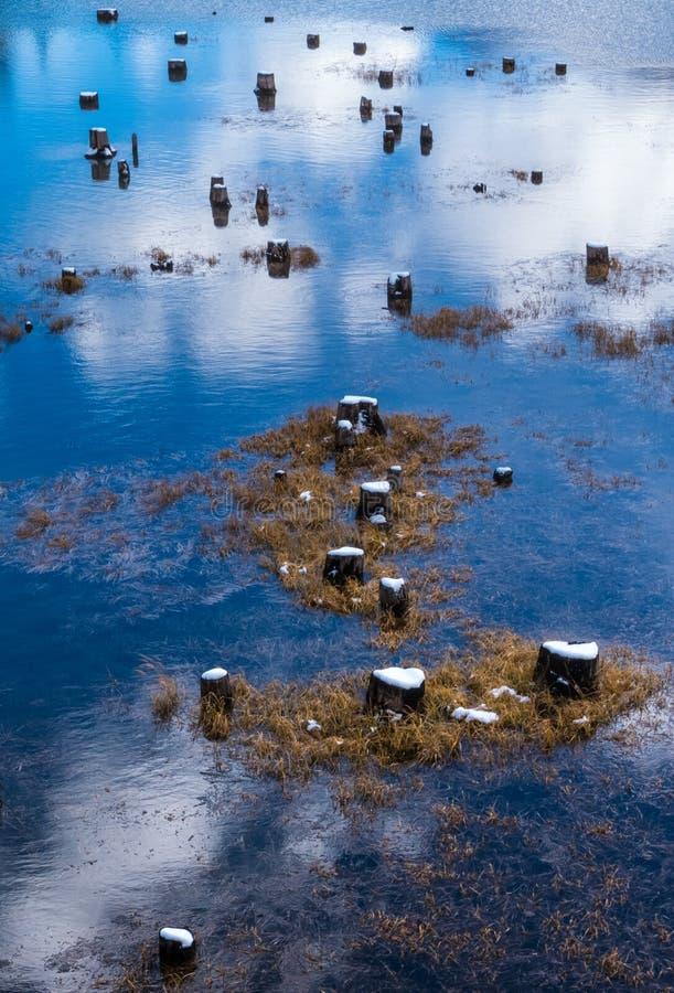 Tocones de árbol y sus reflexiones en el lago superior Kananaskis en Peter Lougheed Provincial Park, Alberta imagen de archivo libre de regalías