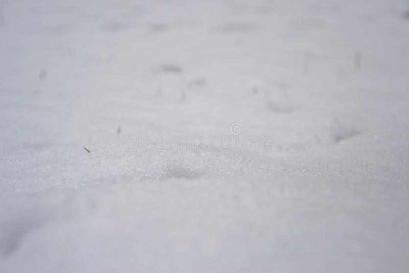 Toczni kryształy śnieg z malutkimi zielonej trawy ostrzami szturcha fotografia stock