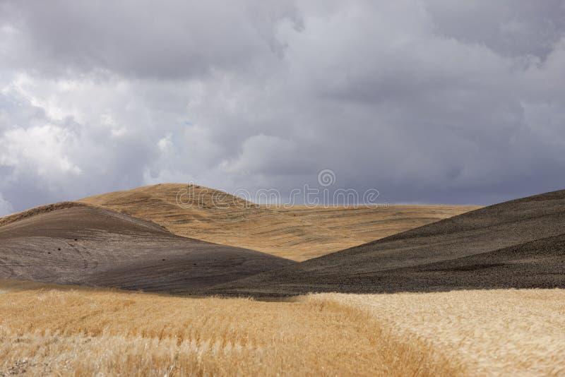 Toczni wzgórza blisko Colfax, Waszyngton obraz stock