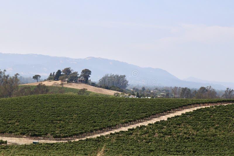 Toczni wzgórza gronowy winnica fotografia royalty free