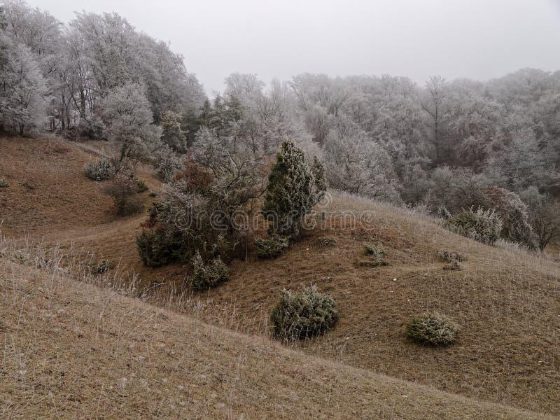 Toczni wzgórza kształtują teren zimnego i frosted obraz stock