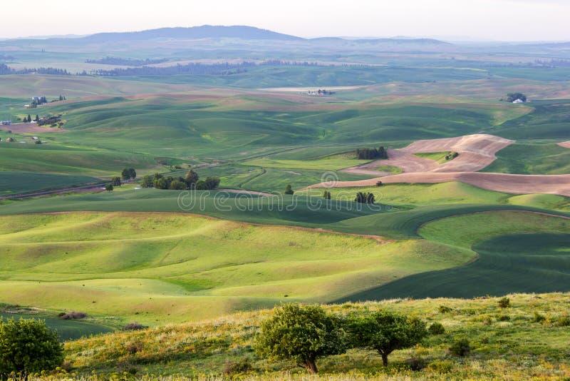Toczni wzgórza z pszenicznymi polami, Palouse, stan washington, usa zdjęcie stock