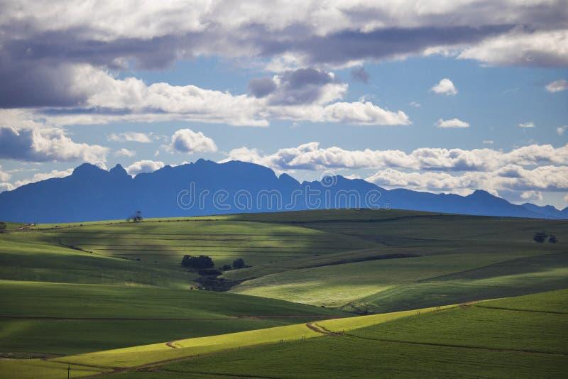 Toczni zieleni rolniczy pola z górami w tle Południowa Afryka - Caledon, Zachodni przylądek - zdjęcie stock