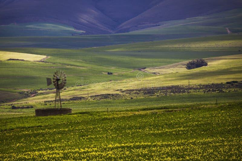 Toczni zieleni rolniczy pola z wiatraczkiem i górami w tle Południowa Afryka - Caledon, Zachodni przylądek - zdjęcie stock