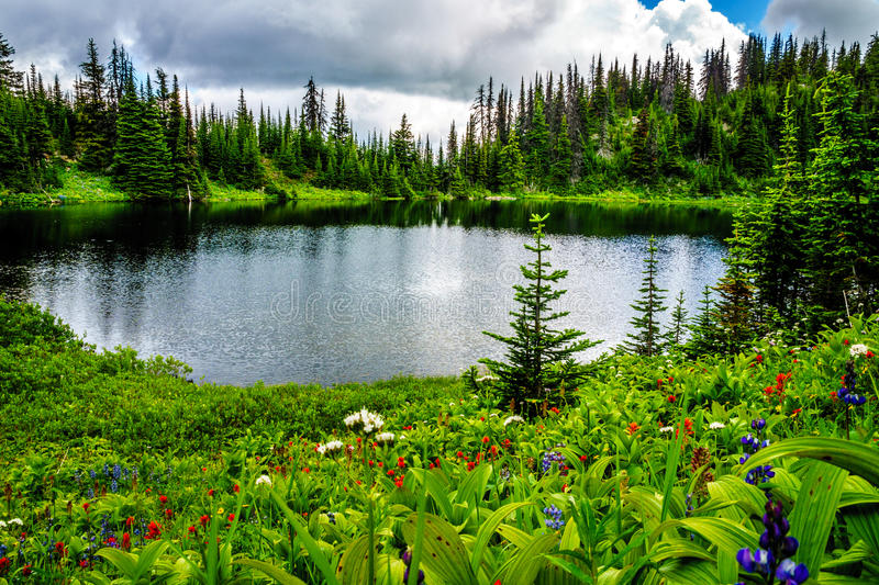 Tod Lake surrounded by wildflower filled alpine meadows near the top of Tod Mountain in the Shuswap Highlands stock image