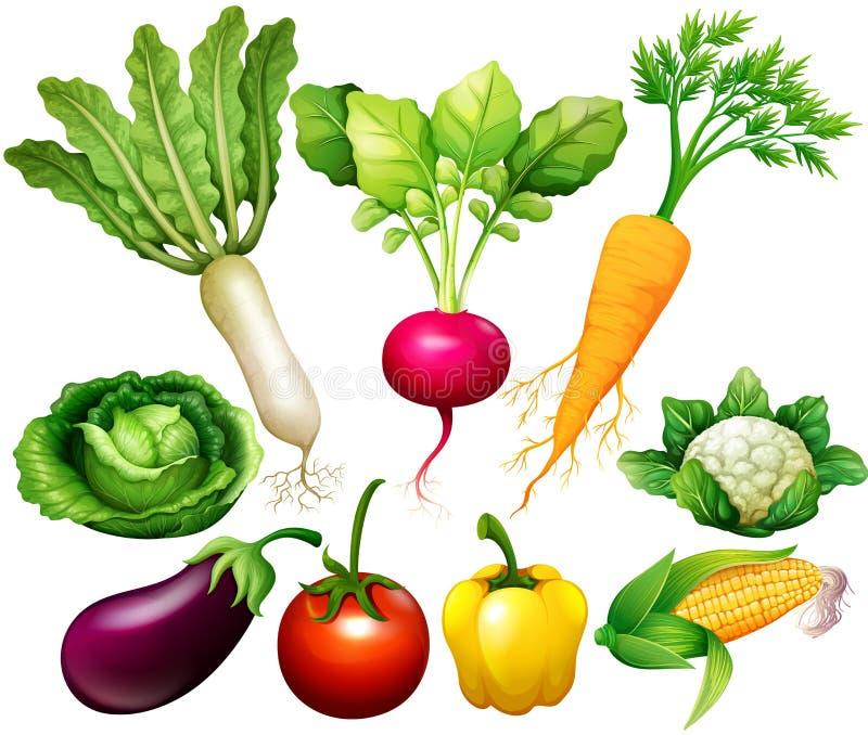 Toda la clase de verduras ilustración del vector