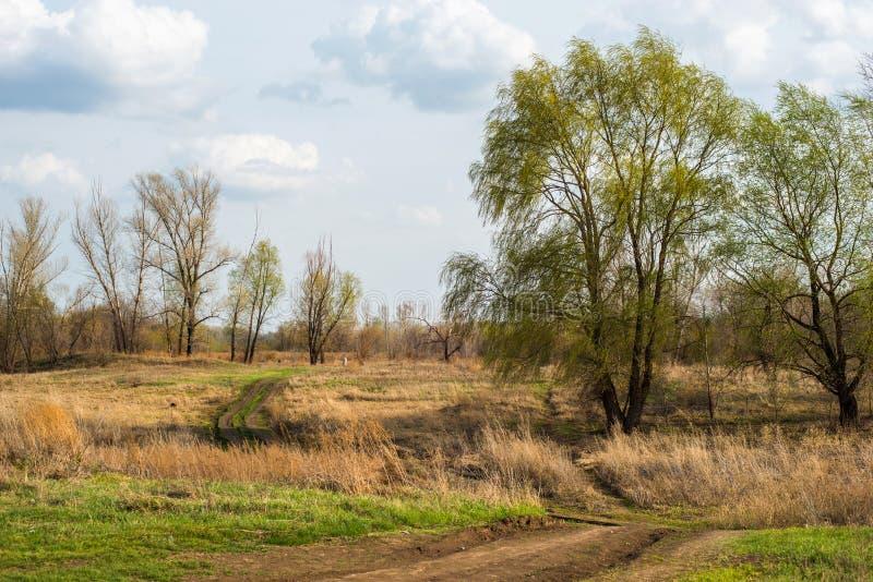 Toda a natureza apenas acorda e não todas as árvores têm as folhas ainda florescidas imagem de stock royalty free