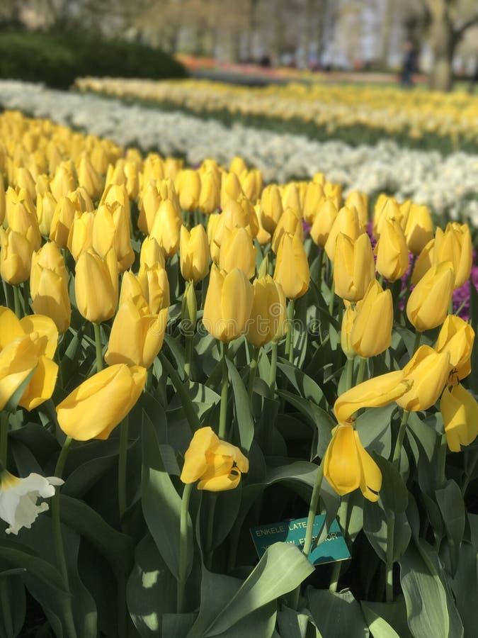 Toda sobre a flor imagens de stock