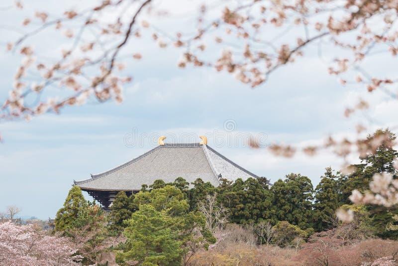 Todaiji tempel i Nara med att blomstra körsbärsröda träd royaltyfri bild