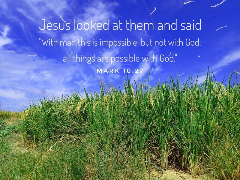 Todas las cosas son posibles del diseño del verso de la biblia para el cristianismo con un fondo maduro del campo de arroz foto de archivo libre de regalías