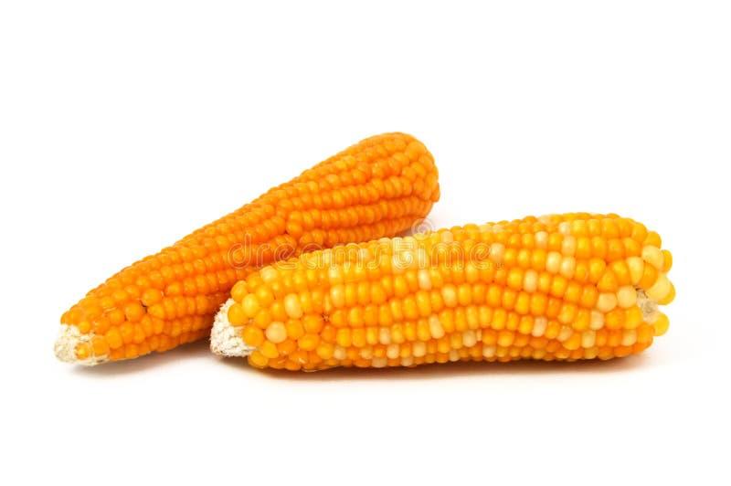 Todas las imágenes secadas del maíz con los bobos imagenes de archivo