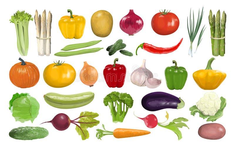 Todas las verduras fijadas stock de ilustración