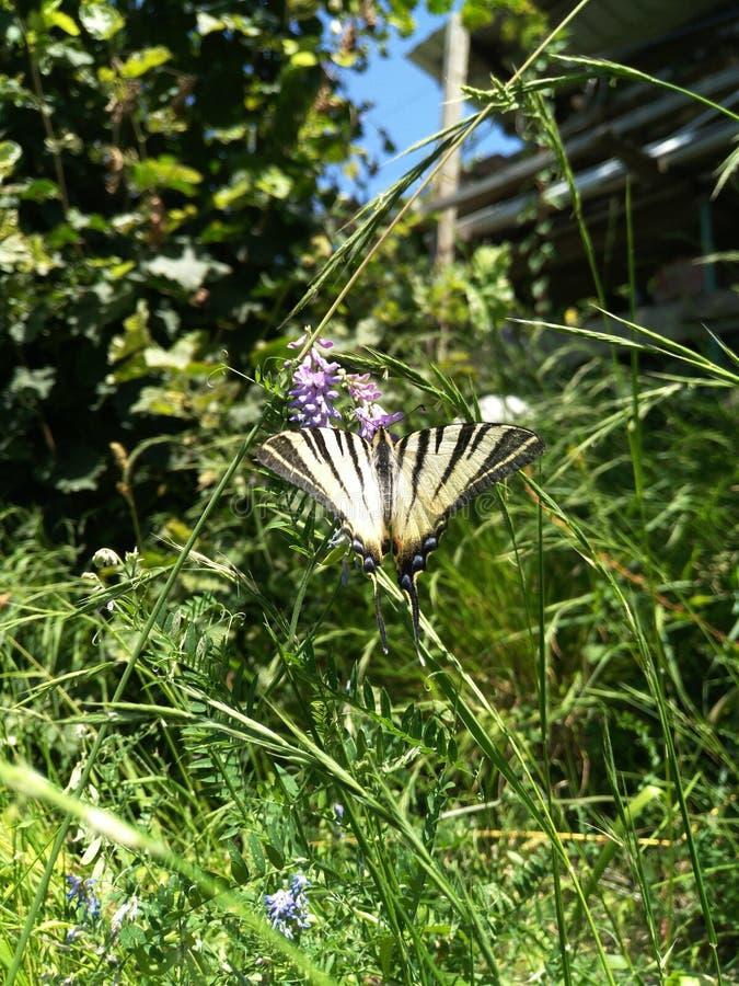 Todavía ajardine la vida con una mariposa rayada imagenes de archivo