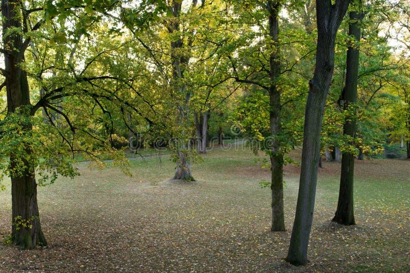 Todavía bosque fotografía de archivo libre de regalías