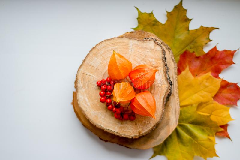 Todavía de la caída vida con las hojas del amarillo, las bayas de serbal y el physalis anaranjado en el corte de madera, endecha  imágenes de archivo libres de regalías