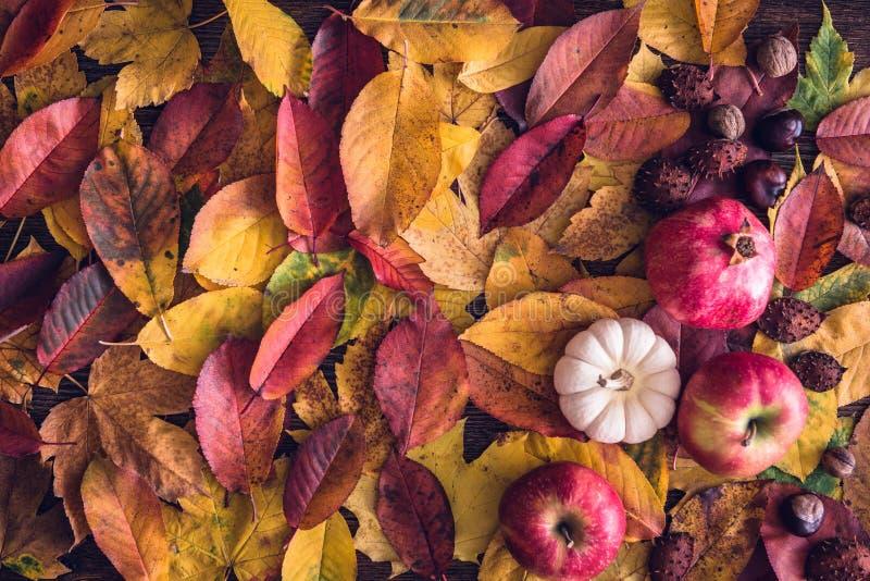 Todavía del otoño fondo de la vida fotos de archivo