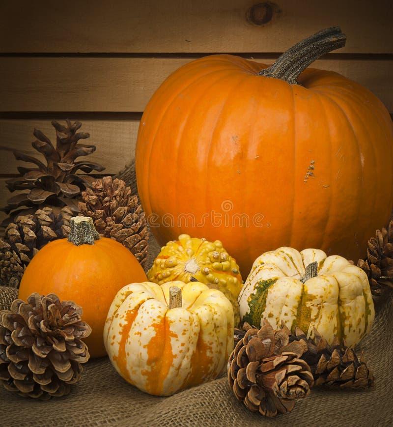 Todavía del otoño vida con las calabazas y los conos del pino fotografía de archivo libre de regalías