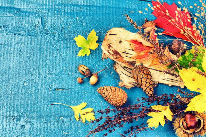 Todavía del otoño vida con las hojas de la caída y las plantas coloridas del bosque f imagenes de archivo