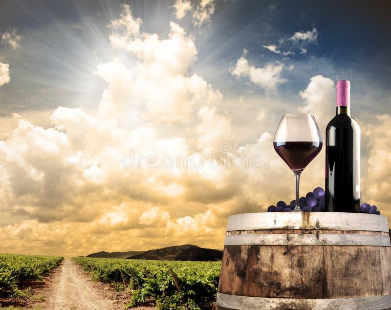 Todavía del vino vida contra viñedo foto de archivo libre de regalías