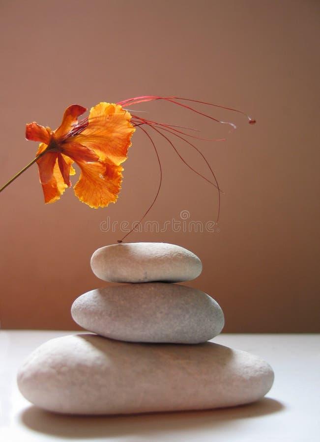Todavía del zen vida con la flor tropical foto de archivo libre de regalías