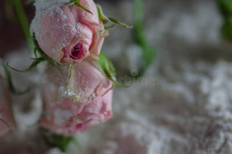 Todavía flores de la vida con la harina y cucharas y un cepillo foto de archivo