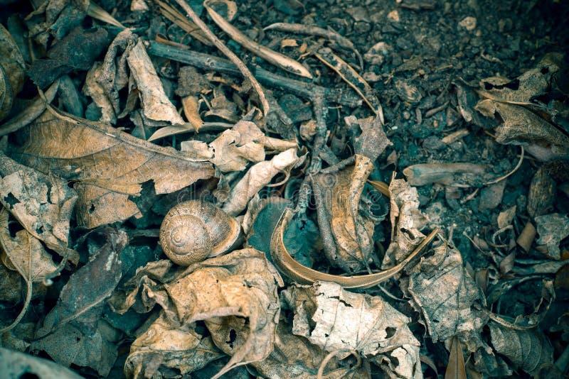 Todavía vida: caracol entre las hojas secas foto de archivo
